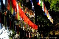16. A Tigris hegyi úton Darjeelingben