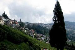 26 . Darjeeling teaültevényekkel