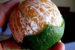 Indiai narancs