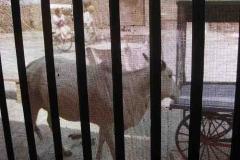 14. Tehéntől védve - Kilátás a Yamuna Kunj előteréből Vrindavanban
