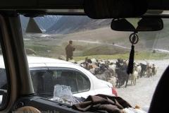 41. Útban Srinagar felé4
