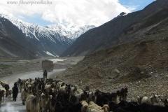 43. Útban Srinagar felé 6
